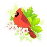 Spring cardinal Royalty Free Stock Photos