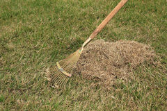 Spring care for lawn, manual scarification of lawn with fan rake Stock Photos
