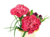 Spring  carnation flowers springtime Stock Photo