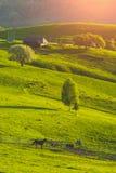 Spring Carpathian green meadow Stock Photography