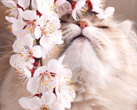 Spring cat Royalty Free Stock Photo