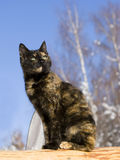 Spring. A cat with green eyes Royalty Free Stock Photos