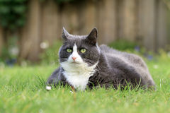 Spring cat nice and fat Royalty Free Stock Photos