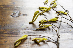Spring catkins buds stock photography