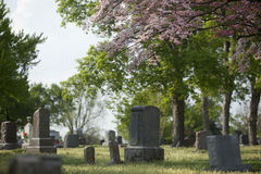 Spring Cemetery Royalty Free Stock Image