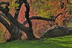 Spring in Central Park. New York amoung the tulip trees Stock Image