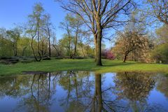 Spring in Central Park. New York at the lake Royalty Free Stock Images