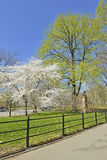 Spring in Central Park with flowering trees, Manhattan, New York Stock Photos
