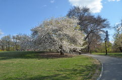 Spring in Central Park, Manhattan, New York. Stock Image