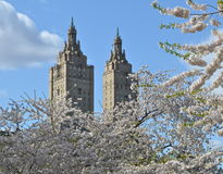 Spring in Central Park, Manhattan, New York. stock photos