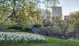 Spring in Central PArk Stock Image