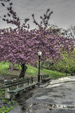 Spring in Central Park, New York City Stock Photo