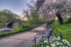 Spring Central Park, New York City Royalty Free Stock Photography