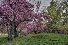 Spring in Central Park, New York City Royalty Free Stock Photography