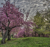 Spring in Central Park, New York City Stock Photos