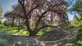 Spring in Central PArk Royalty Free Stock Image
