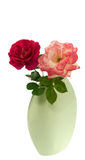 Spring cerise red and pink roses in vase isolated Royalty Free Stock Photos