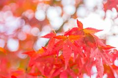 Spring change color Stock Image