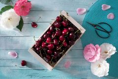 Spring Cherries Royalty Free Stock Photo