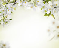 Spring cherry blossom backgrounds Stock Photos