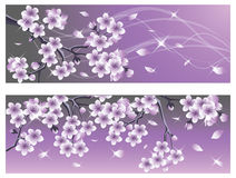 Spring Cherry blossom banner. Royalty Free Stock Photos