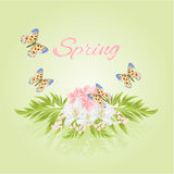 Spring cherry blossom and jasmine with butterflies vector Stock Photography