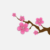 Spring Cherry blossom. Pink beautiful sakura branch with papercraft flowers. Royalty Free Stock Photos