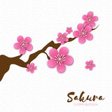 Spring Cherry blossom. Pink beautiful sakura branch with papercraft flowers. Stock Images