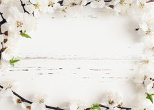 Spring cherry blossom on rustic wooden background. Stock Images