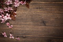 Spring cherry blossoms. Spring cherry blossom on rustic wooden backkground Royalty Free Stock Photography