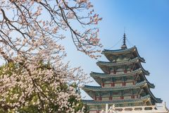 Spring in Seoul South Korea Royalty Free Stock Image