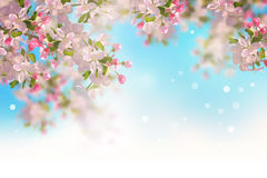 Spring Cherry Blossom. Vector background with spring cherry blossom. Sakura branch in springtime vector illustration