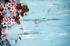 Spring cherry blossoms. Spring cherry blossom on blue rustic wooden backkground Royalty Free Stock Photography