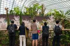 Spring cherry blossoms at Gardens by the Bay Royalty Free Stock Photo