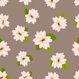 Spring cherry blossoms. Seamless pattern with Japanese sakura. Pink flowers on gray beige background. Romantic Vector illustration.  Royalty Free Stock Photos