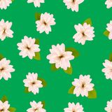 Spring cherry blossoms. Seamless pattern with Japanese�sakura. Pink flowers on green background. Romantic Vector illustration. Spring cherry blossoms Royalty Free Stock Image