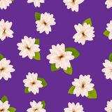 Spring cherry blossoms. Seamless pattern with Japanese sakura. Pink flowers on purple background. Romantic Vector illustration. Royalty Free Stock Photography