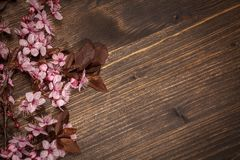 Spring cherry blossoms. Spring cherry blossom on rustic wooden backkground Stock Photography