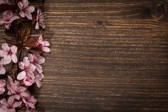 Spring cherry blossoms. Spring cherry blossom on rustic wooden backkground Royalty Free Stock Photos