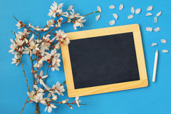 Spring cherry blossoms tree and blackboard Stock Image