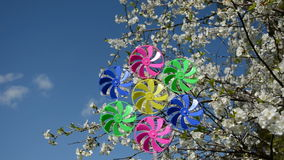 Spring cherry blossoms and windmill toy stock video