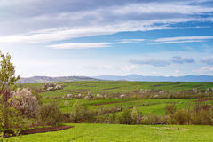 Spring cherry orchard blossom on hills. Sunny spring Stock Photos
