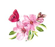 Spring cherry, sakura flowers or pink apple blossom and butterfly. Flourish water color
