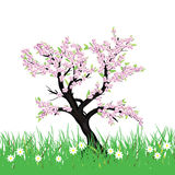 Spring cherry tree with blossom grass Stock Photos