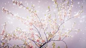 Magic spring. Spring cherry tree with magic stars like a background Royalty Free Stock Images