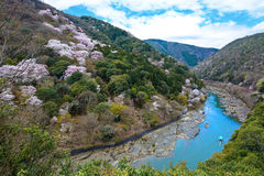 Spring cherry trees flowering along the Katsura River mountainside in Kyoto, Japan. Wild cherry trees flowering along the banks of the Katsura River in the Royalty Free Stock Photography