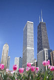 Spring in Chicago Royalty Free Stock Photos