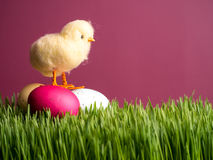 Spring Chick on Easter Eggs Royalty Free Stock Photo