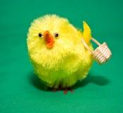 Spring Chicken Stock Image