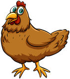A spring chicken idiom Stock Photography